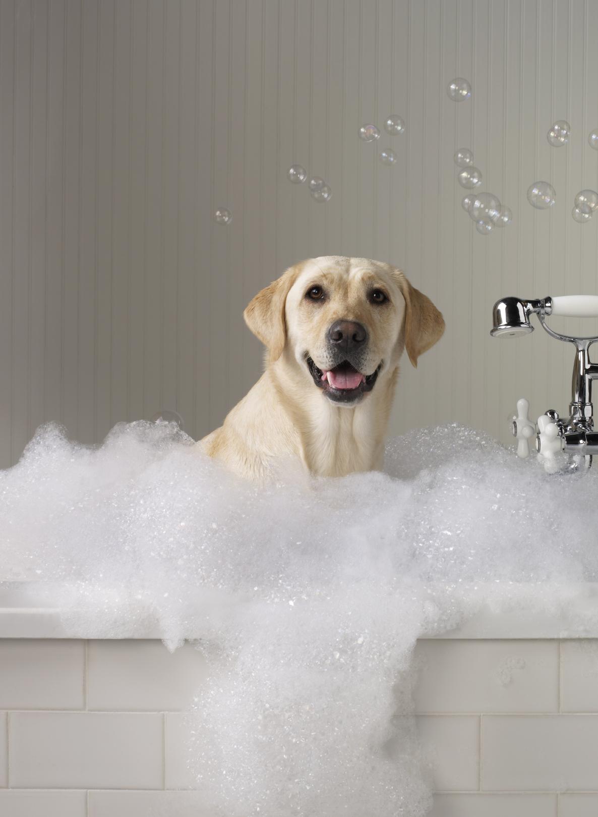 Dog Grooming Procedures