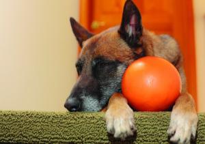 Dog cancer treatment trial